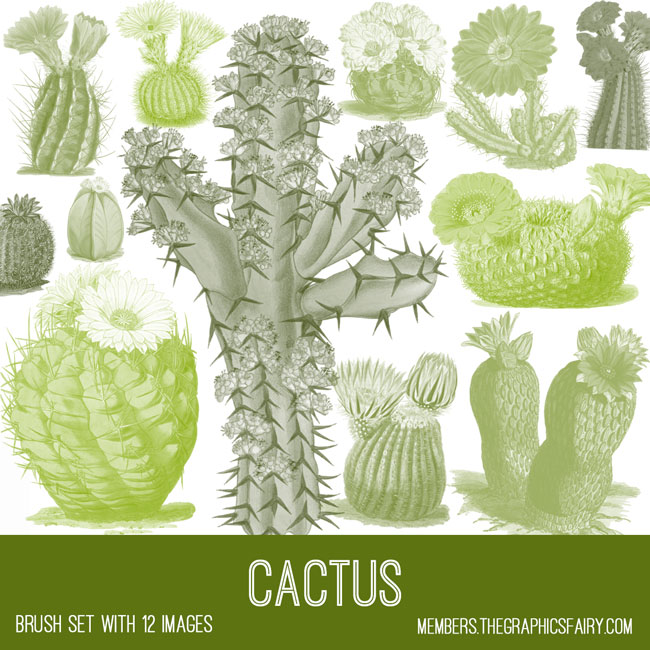 vintage cactus ephemera brush set