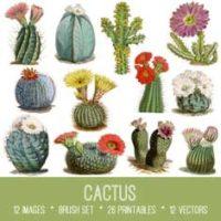 vintage cactus ephemera bundle