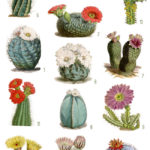vintage cactus ephemera digital image bundle