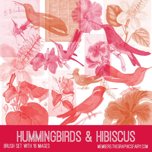 vintage hummingbirds hibiscus ephemera brush set