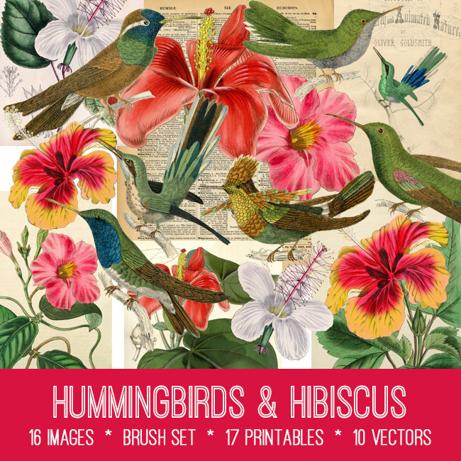 hummingbirds & hibiscus vintage images