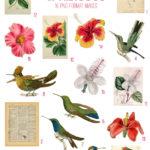 vintage hummingbirds & hibiscus ephemera digital image bundle