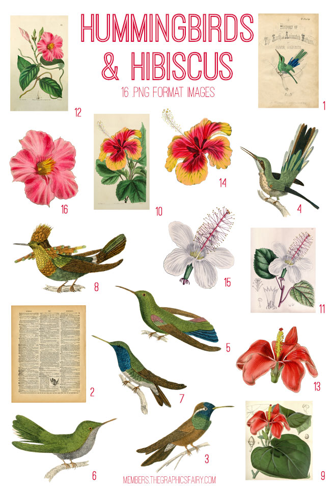 vintage hummingbirds & hibiscus ephemera digital image bundle