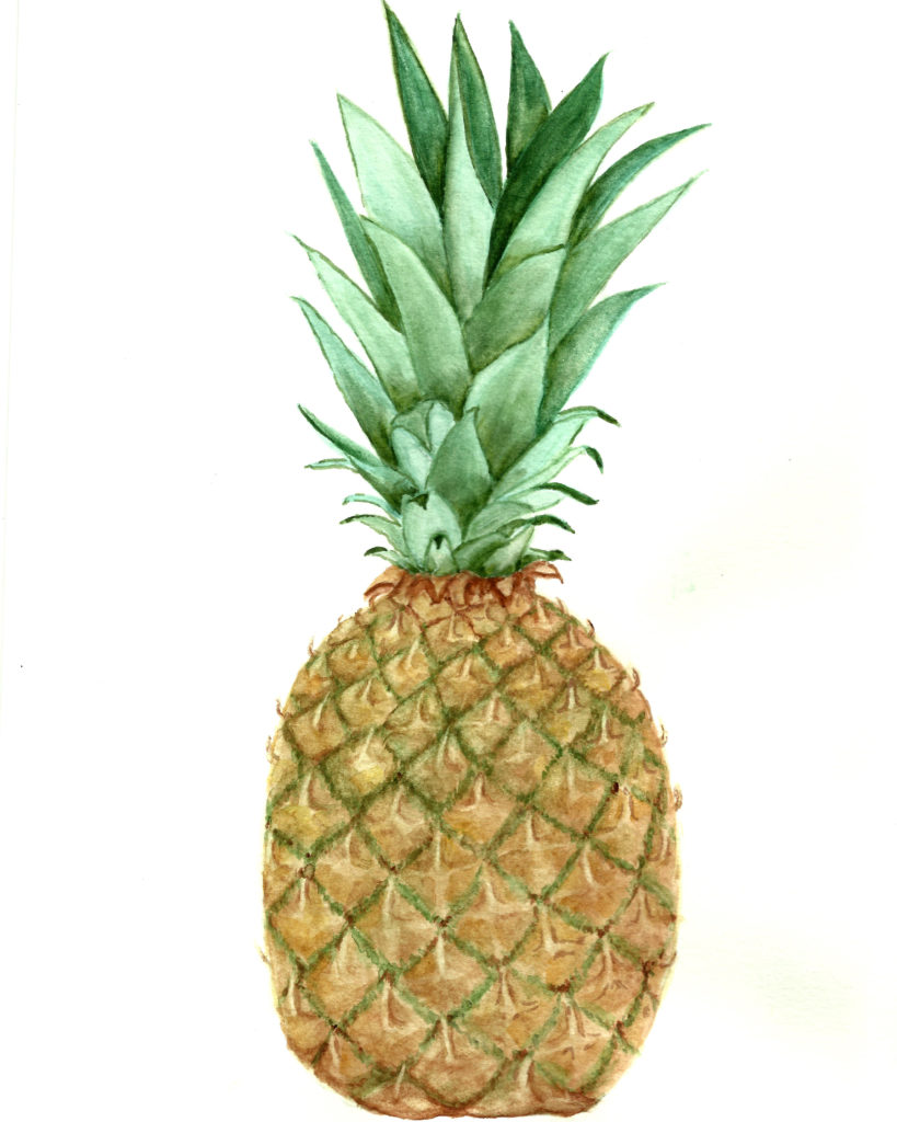 watercolor pineapple image