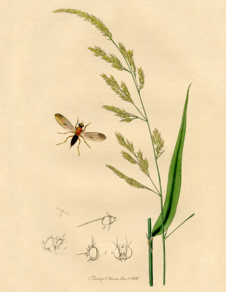 antique botanical with insect image