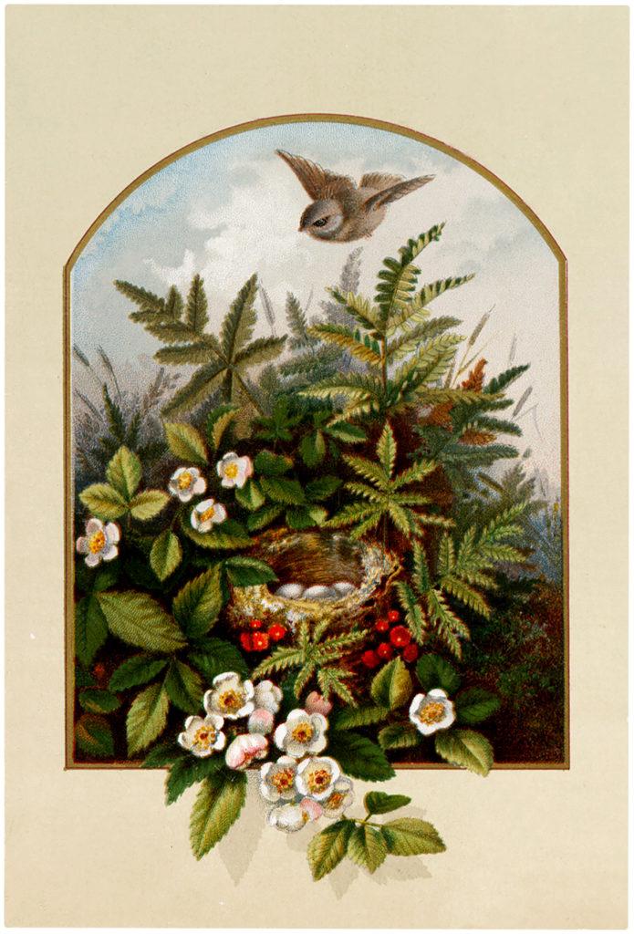 framed bird nest flowers bird illustration