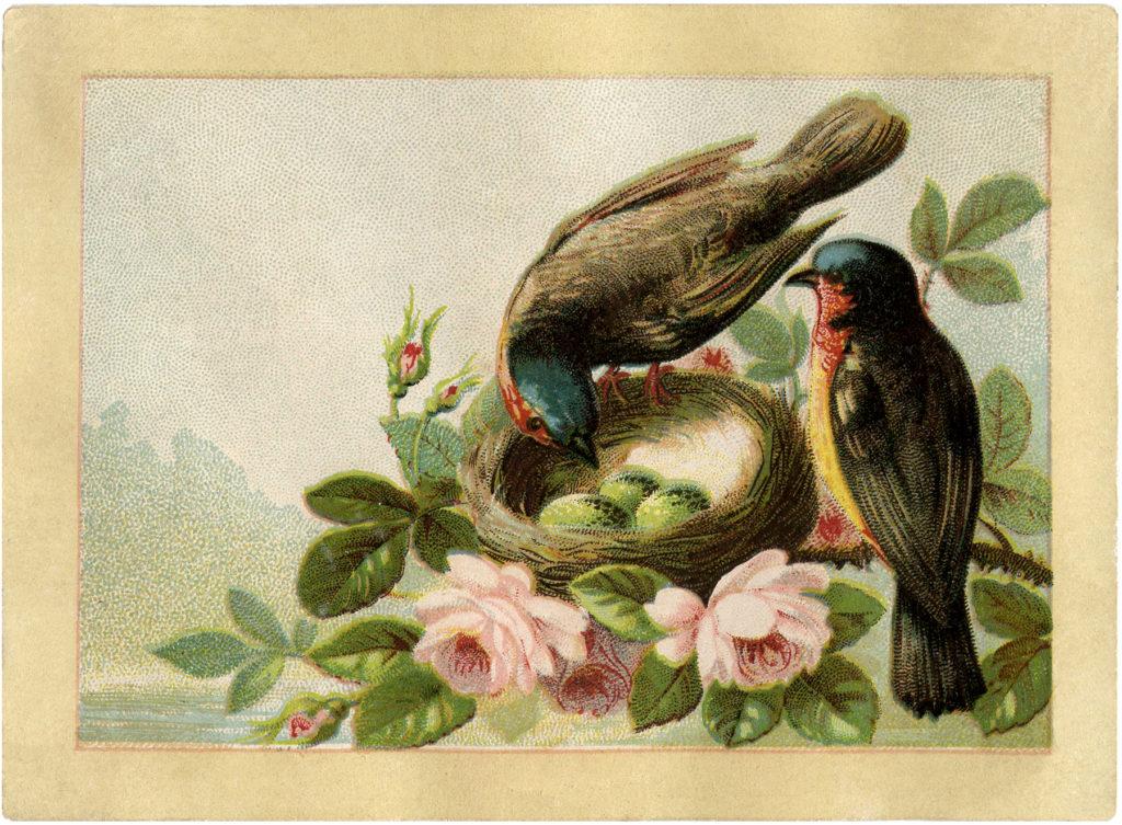birds nest eggs pink roses vintage image