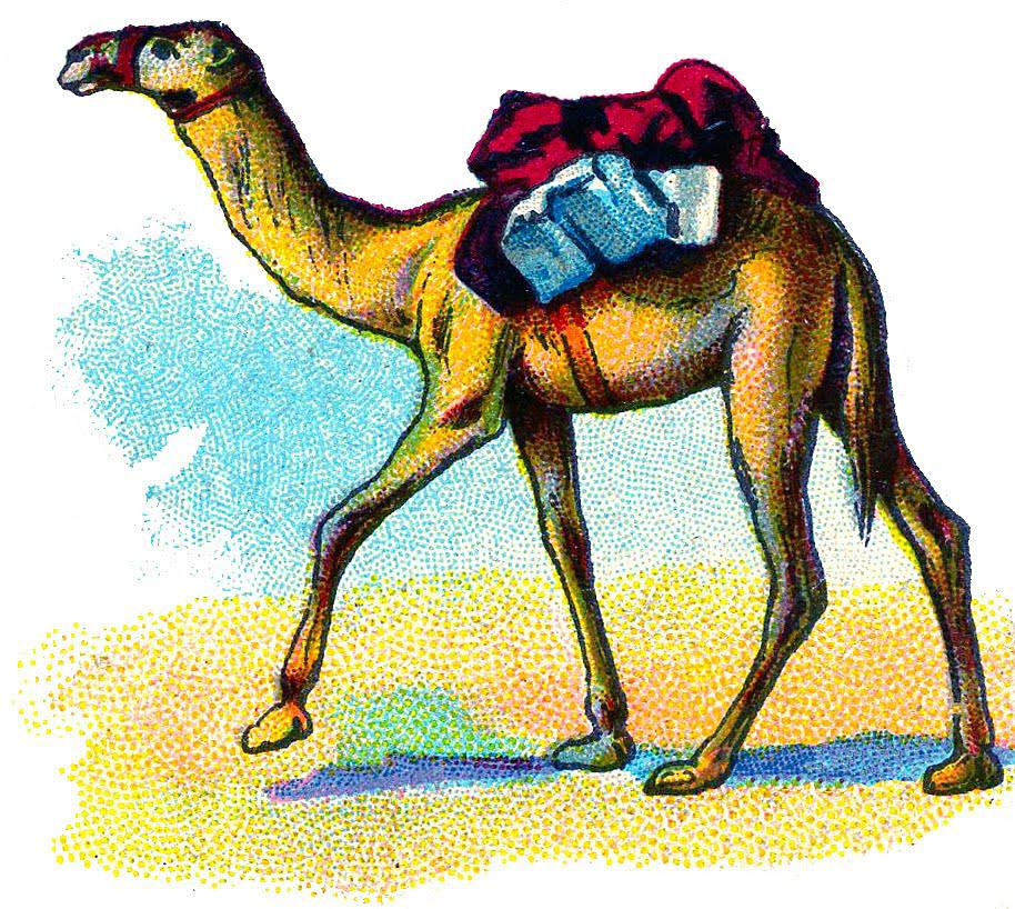 camel pack vintage illustration