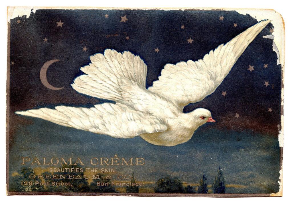 dove moon night sky advertising illustration