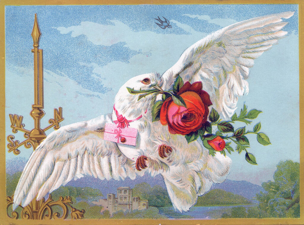 dove flying pink roses image