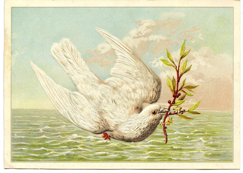 white dove sea holding sprig image