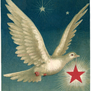 white dove starry sky star image
