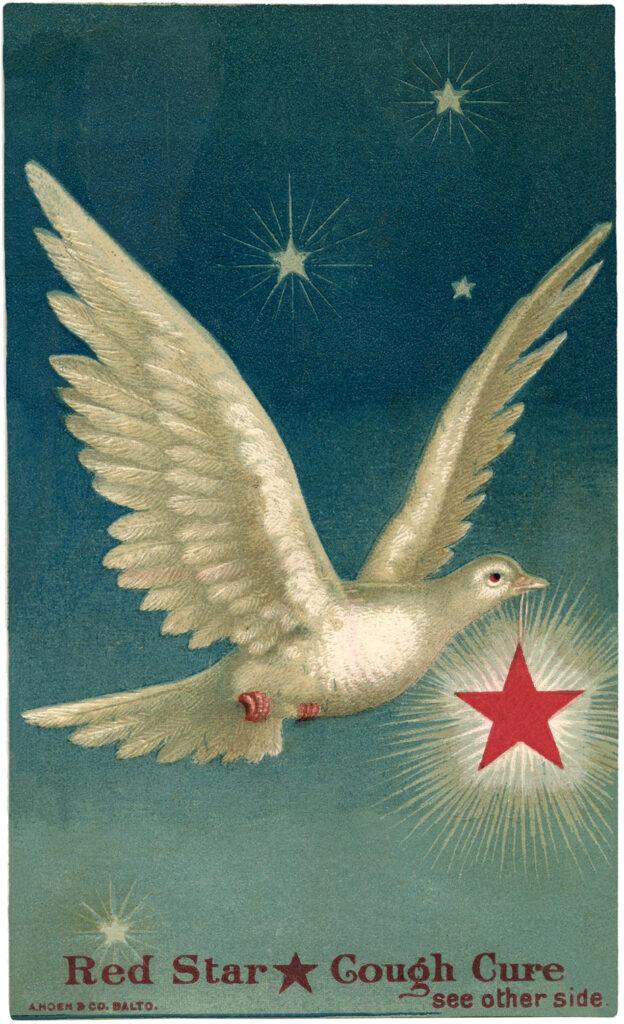 white dove starry sky star image