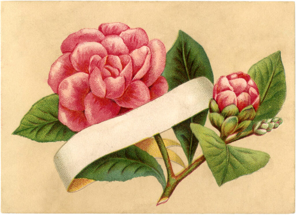 pink rose blank banner illustration