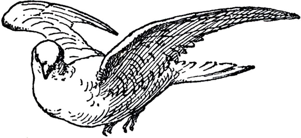 antique dove engraving image