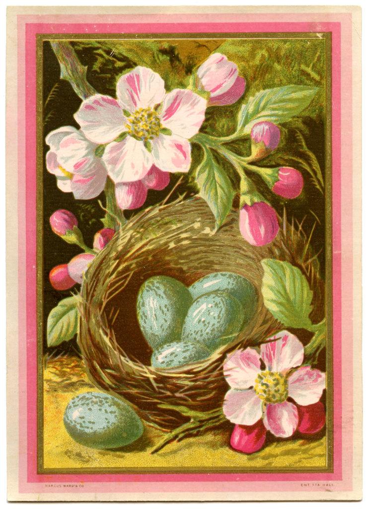 nest blue eggs pink flowers image