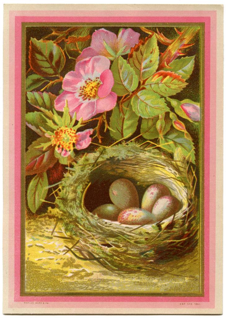 nest brown eggs pink flowers illustration