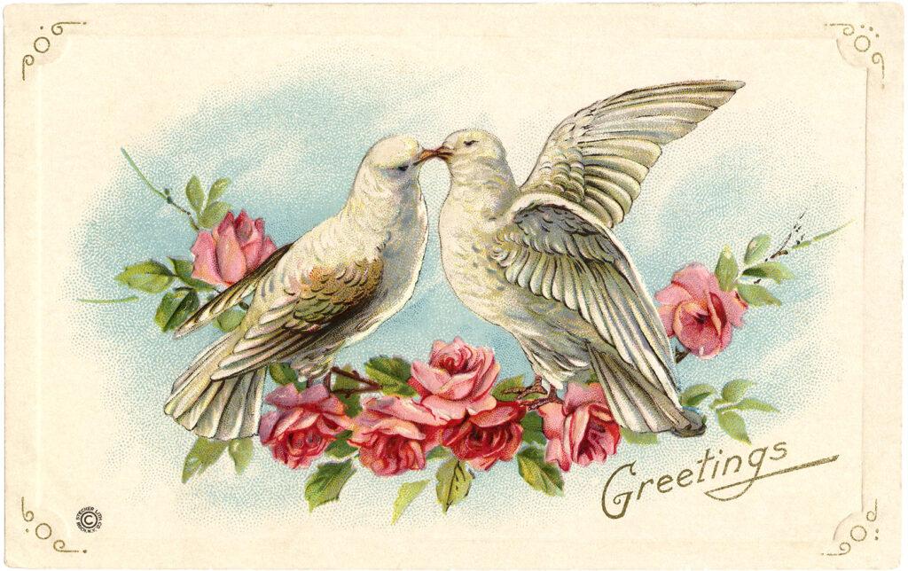 old valentine doves roses image
