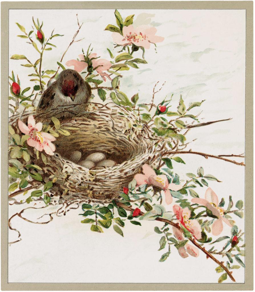 bird nest eggs pink flowers illustration