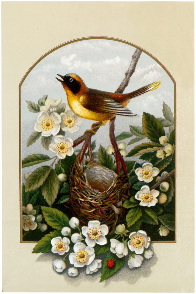 yellow bird nest flowers image