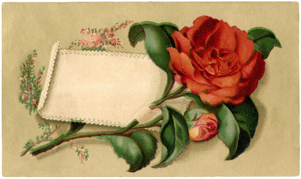 red rose label image