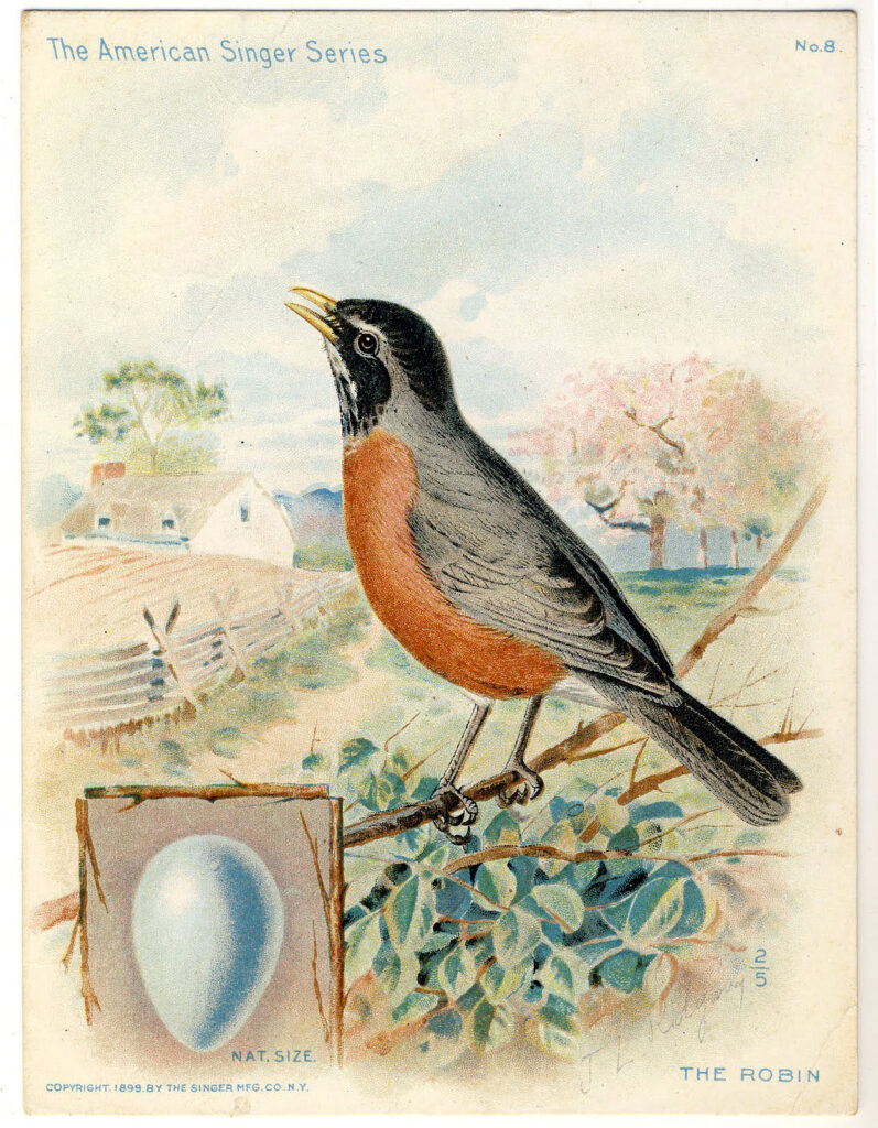 robin singing egg illustration