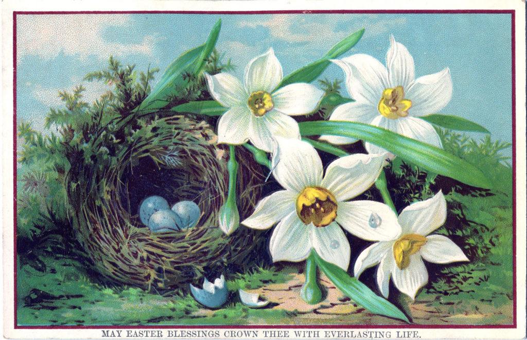 nest eggs white flowers image