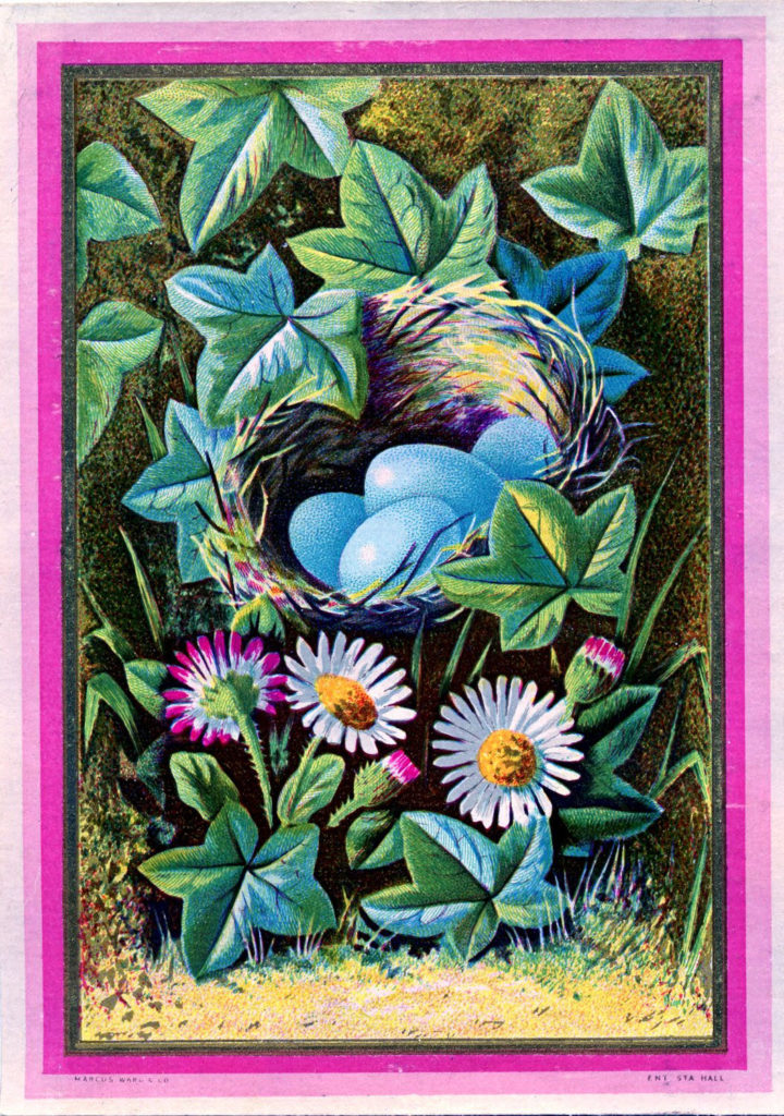 sparrow nest blue eggs illustration