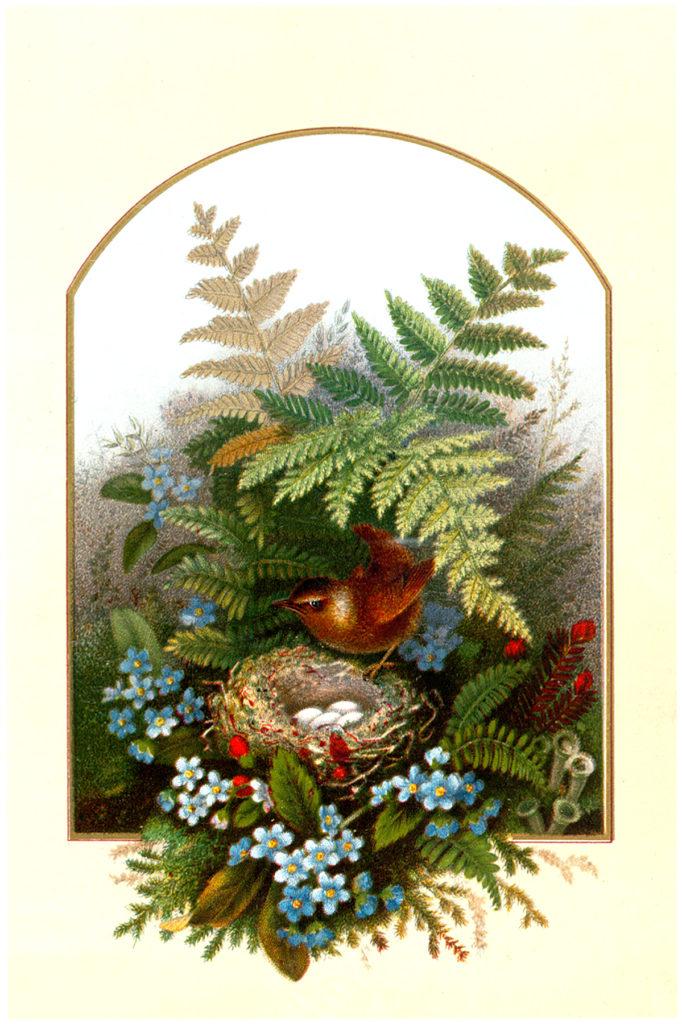 vintage bird's nest ferns flowers clipart