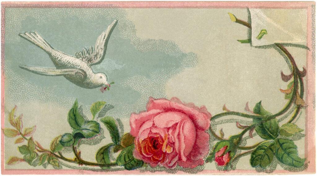vintage white dove rose image