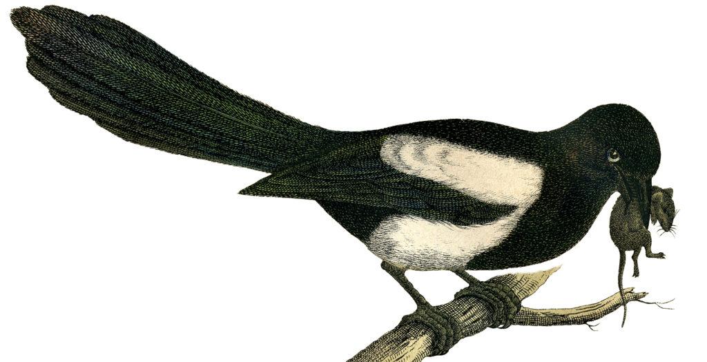 vintage blackbird mouse clipart