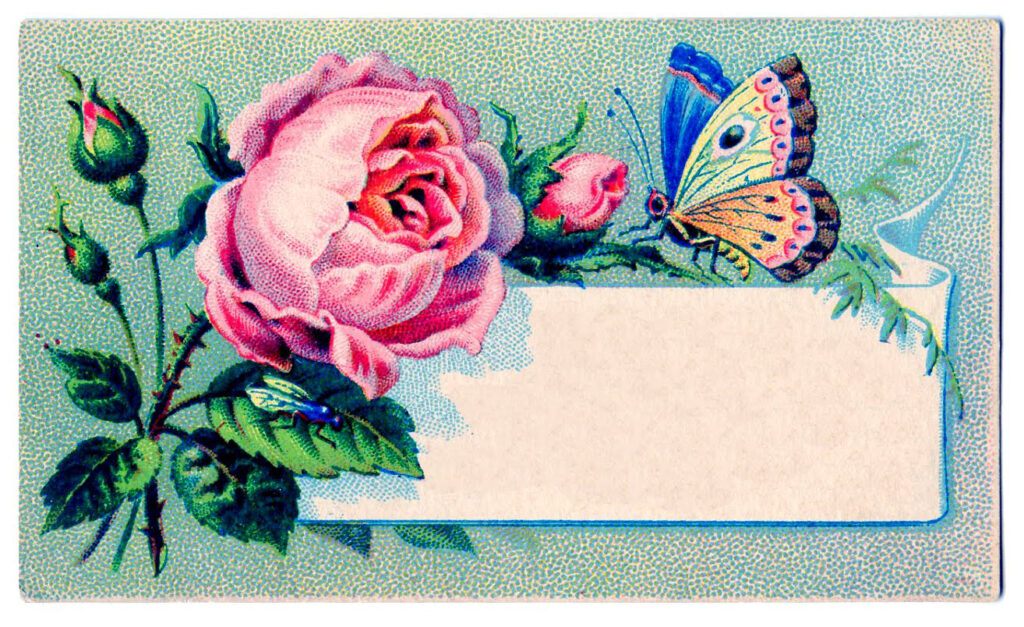 blank calling card butterfly pink rose image
