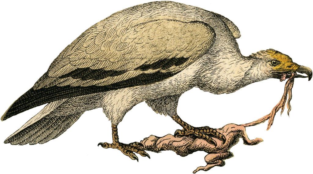 creepy bird of prey image