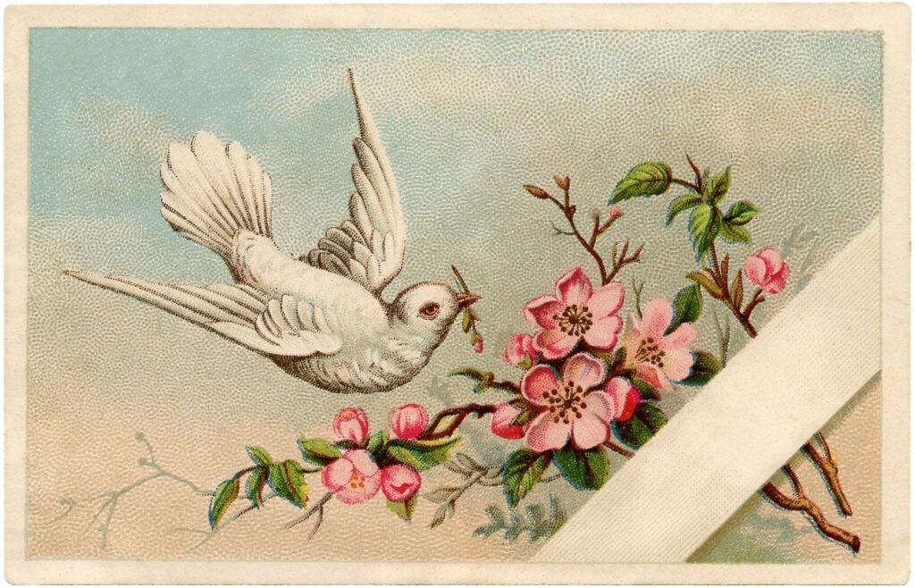 vintage dove pink flowers illustration