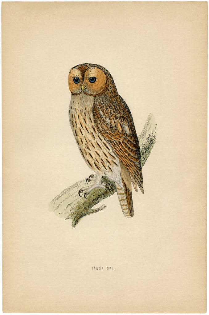 vintage printable owl illustration