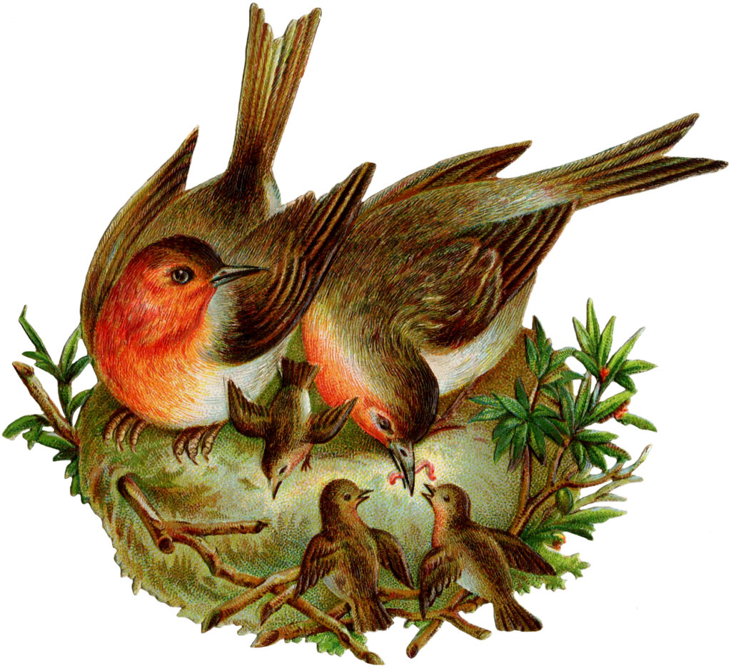 vintage robins nest fledglings clipart