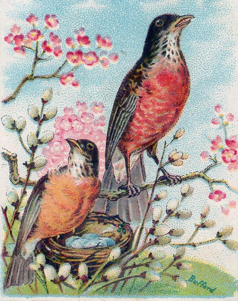 vintage robins nest eggs image