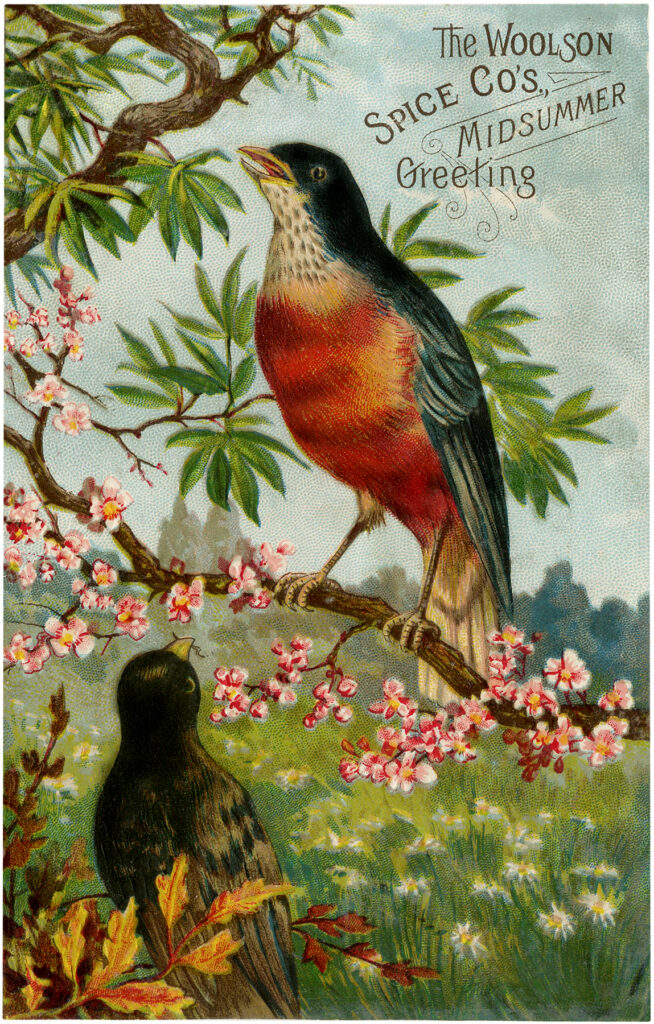 vintage advertising birds robin illustration