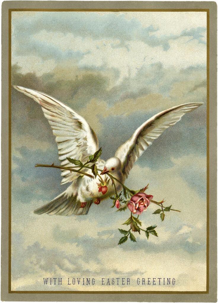 white dove roses vintage clipart