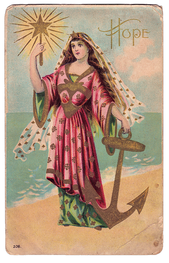 lady anchor sea star image