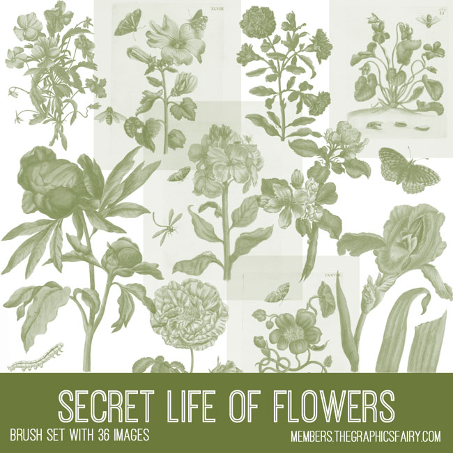 vintage secret life of flowers ephemera brush set