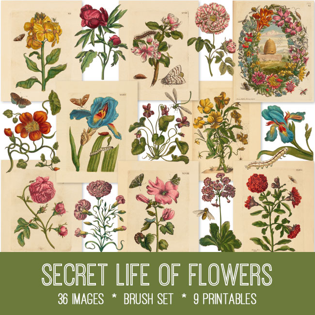 Secret Life of Flowers vintage images