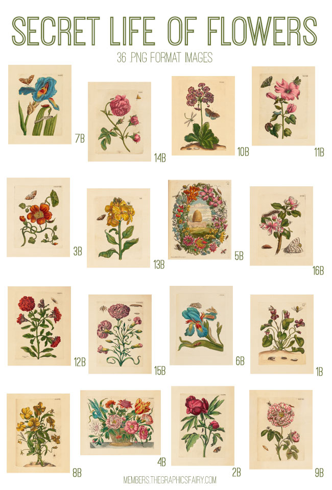 vintage secret life of flowers ephemera digital image bundle