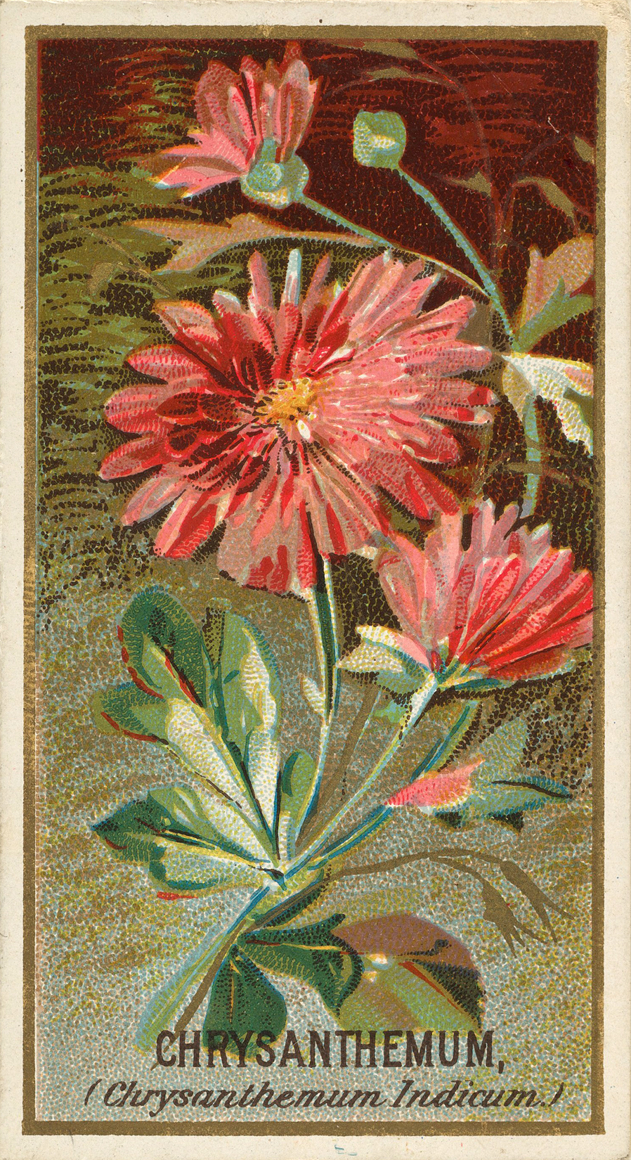 Fall Mums Card
