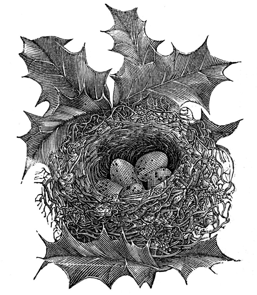 nest eggs holly vintage image