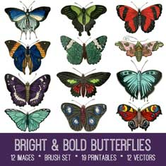 bright bold butterflies kit