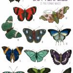 vintage bright & bold butterflies ephemera digital image bundle
