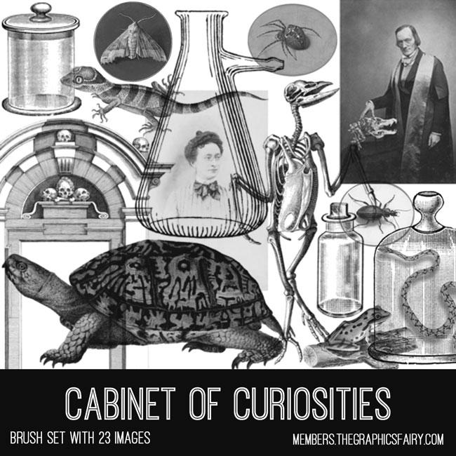 cabinet of curiosities vintage ephemera brush set
