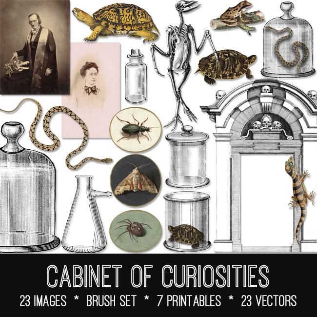 Cabinet of Curiosities ephemera vintage images