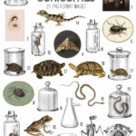 cabinet of curiosities vintage ephemera digital image bundle